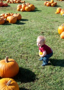 Choosing the right Pumpkin